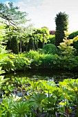 Mature garden pond surrounded by many various foliage plants
