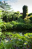 Eingewachsener Gartenteich mit vielen verschiedenen Grünpflanzen