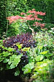Lush sea of plants in sunny garden