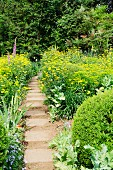 Garden path leading between borders of yellow summer flowers