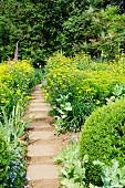 Gartenweg führt durch gelb blühende Sommerblumen