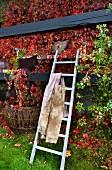 Leiter mit Decken an die mit rotem Weinlaub berankten Holzbalken einer Veranda gelehnt