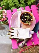 Seedlings in terracotta pot on pink garden chair