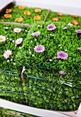 Artificial grass with fake flowers