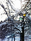 Tiny colourful nesting boxes hanging from snowy branches