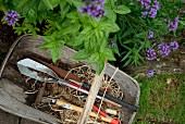 Gardening tools in wooden trug next to bed of herbs