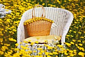 White wicker chair amongst meadow of yellow flowers