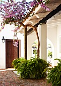 Roofed, Mediterranean entrance courtyard with tall bougainvillea and potted ferns
