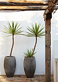 Palm trees in stone pots against white wall; pergola with artistically carved wooden posts