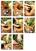 Lining a wire hanging basket with coconut fibre and planting with bedding
