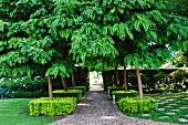 Akazienbäume mit formgeschnittenen Büschen um dem Stamm in einer Parkanlage