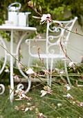 Rosa blühende Gartenblumen; im Hintergrund filigrane Gartenmöbel