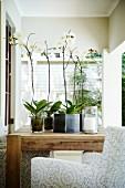 weiße Orchideen im Topf auf Holztisch und Sessel auf der Veranda