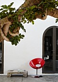 Intertwined branches of fig tree in front of white house facade and red designer chair