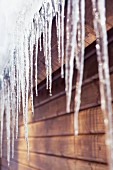 Icicle on wooden roof