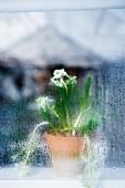 A flower pot behind a misty window.