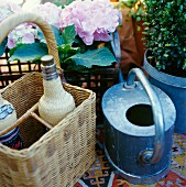 Watering can, wicker bottle carrier & potted hydrangea on balcony