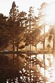 Morning sunlight slanting through woods next to lake