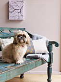 Dog sitting on blue bench in pale interior