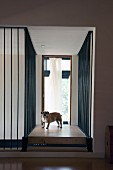 Corridor with floor-to-ceiling metal bars surrounding set of steps and dog on landing leading to French window