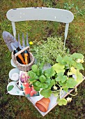 Gardening tools, packets of seeds and plants on tray on garden chair