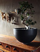 Bonsai tree in elegant, black ceramic bowl on vintage chest of drawers; small collection of animal trophies on wall