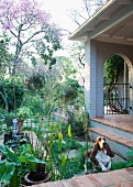 Veranda with brick floor bordered by summer garden and dog jumping up onto veranda