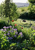 Blooming garden on slope; cow in meadow beyond fence