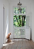 Open door with closed, white wooden gate in restored manor house with stuffed fox on old, stripped wooden floor