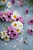 Wreath of pink and white daisies