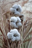 Wintery arrangement of cotton capsules & dried grasses