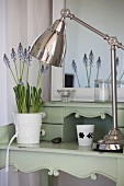 Retro-look metal lamp and pot of grape hyacinths on shabby chic, pastel green desk