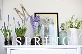 Shabby chic arrangement on white cabinet with spring flowers in glass vessels and enamel jug, old soda siphon behind row of letters reading SPRING