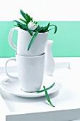 Snowdrop (Galanthus nivalis) in mug