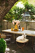 Lantern hanging from tree above garden table with old chairs and dog sitting on stool
