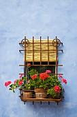Iron window grille with potted geraniums on facade painted cloudy blue