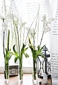 Narrow glass vases of spring flowers, Easter decorations and candle lantern