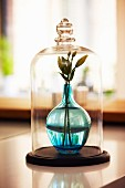 Flowers in pale blue glass vase under glass cover