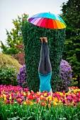 Lady with a colorful umbrella doing a handstand in a bed of tulips