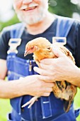 Man wearing overalls and holding live hen