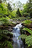 Waterfall in wild, green woodland landscape