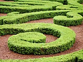 Geometric pattern of green hedge