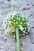 An onion flower