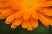 Orangefarbene Blüte