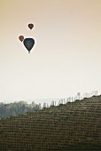 Three Hot Air Balloons Flying Over Vineyard, Italy