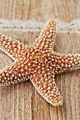 Dried starfish on weathered wooden surface