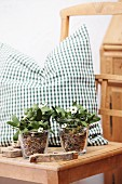 Star-of-Bethlehem and mistletoe in glasses of bird food in front of green gingham cushion on kitchen chair