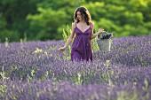 Young woman in lavender field. Vignale Monferrato, Piemonte, Italy.