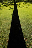 Elongated shadow of tree on green lawn