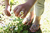 Woman wearing daisy as ring on finger standing next to sunny flowerbed